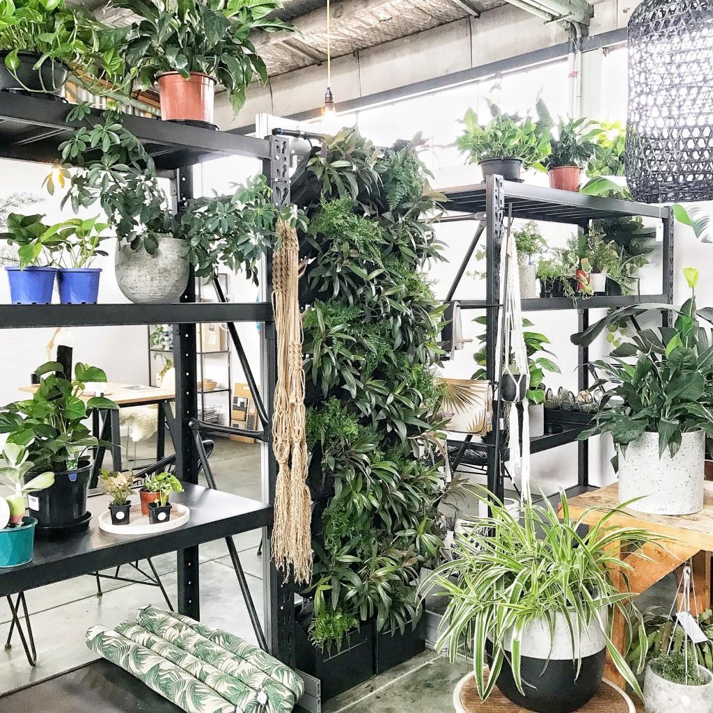 vicinity-green-wall