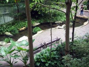 Courtyard forest - Khoo Teck Puat Hospitalrtyard forest - Khoo Teck Puat Hospital