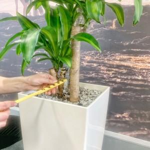 3. Soil probe Image Nerida's Interior Plantscaping Victoria-min