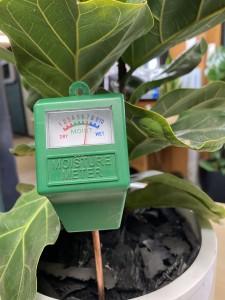 4. Soil moisture meter Image Tropical Plant Rentals NSW-min