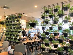 vertical-gardens-Gosford-RSL-Vertical-Garden-Ivy-Small-Black-Wall-Pots
